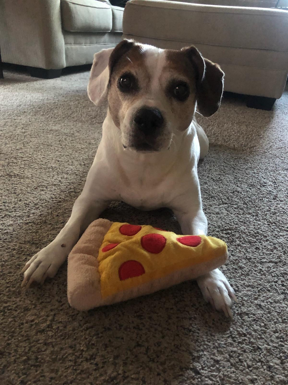 tyler.vavrik on One Bite Pizza App