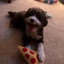 elizabeth.m on One Bite Pizza App
