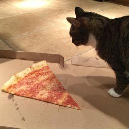 jeeves.sritharan on One Bite Pizza App