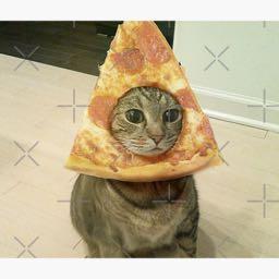 brodg_531 on One Bite Pizza App
